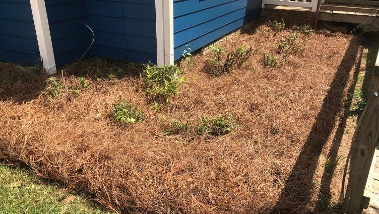 Pine Straw Installer Charlotte NC