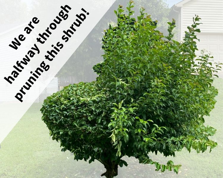 Shrub Pruning Service Example